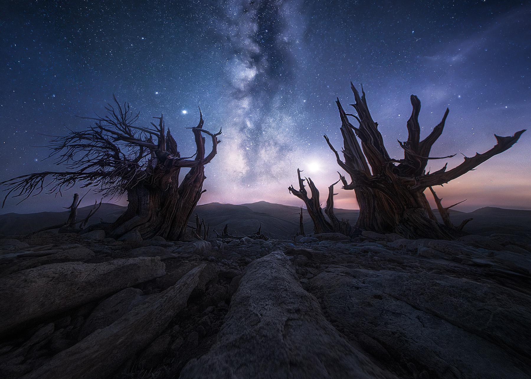 bristlecone, saturn, moon, Jupiter, night, Milky Way, California, photo