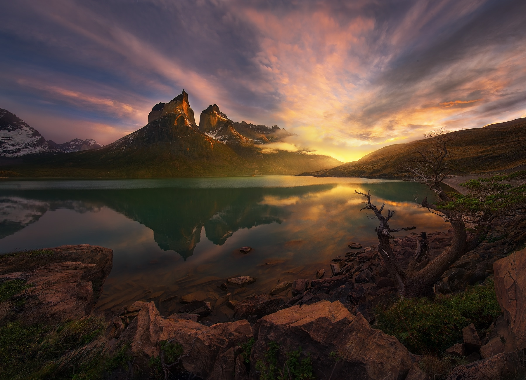 Patagonia chile torres del paine reflection tree photo ·