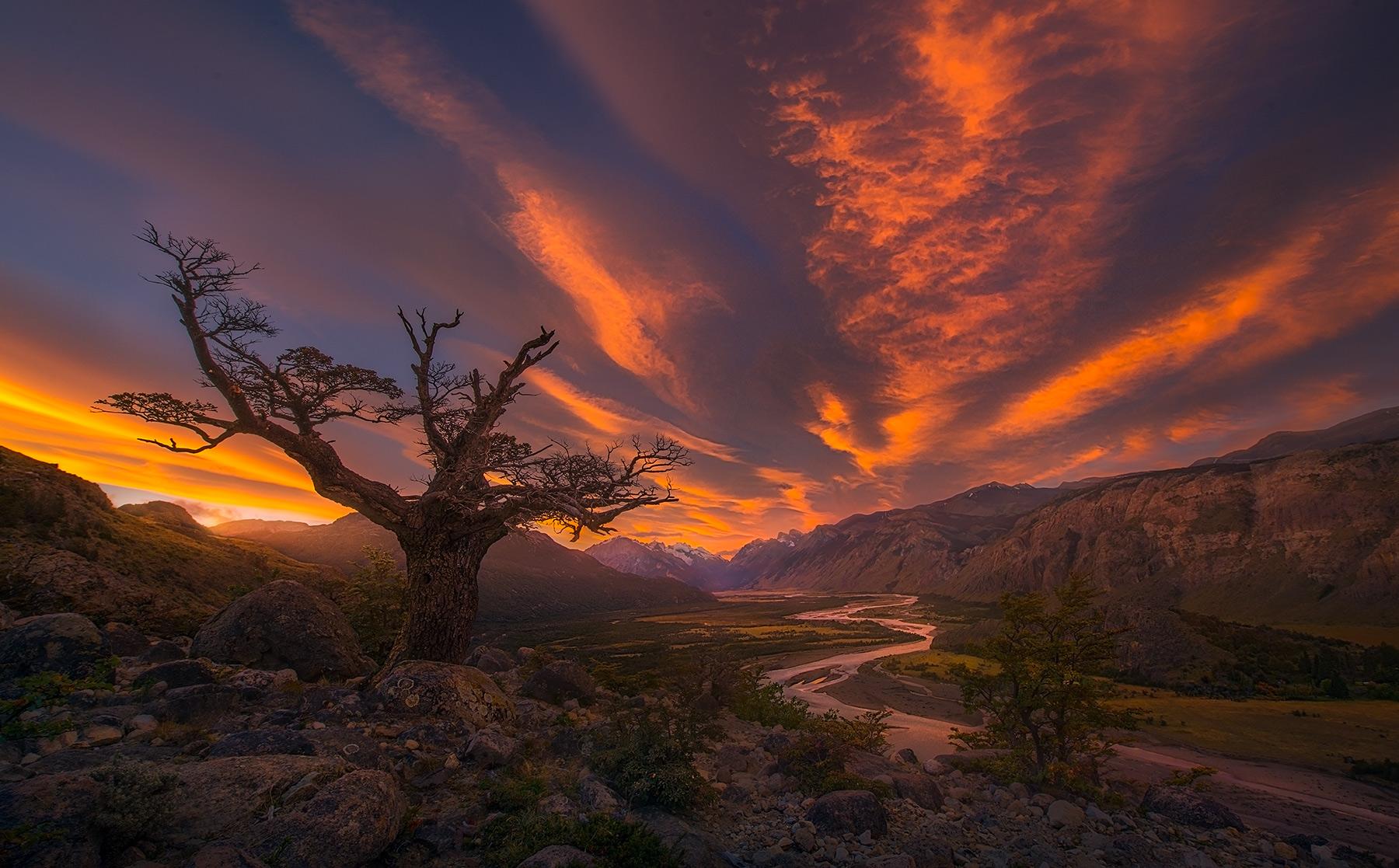 Old tree, Tree, Sunset, River, Vista, Argentina, photo