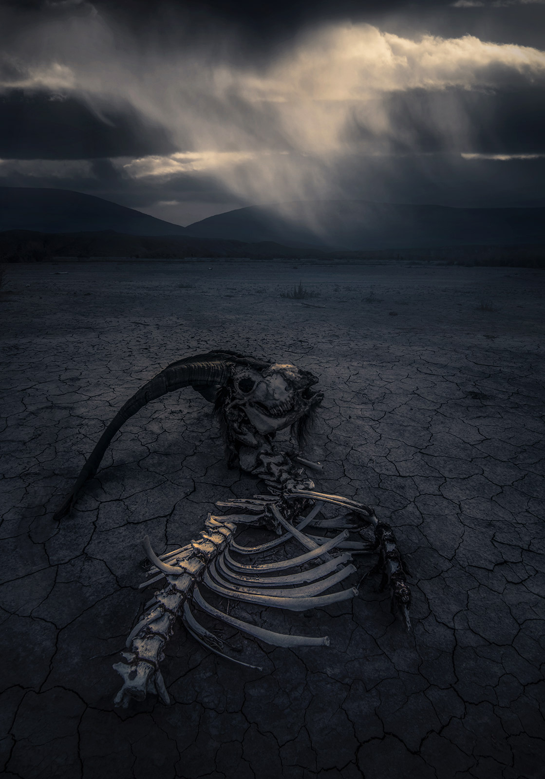 death, skeleton, dying, ominous, cracked, desert, skull, southwest, photo