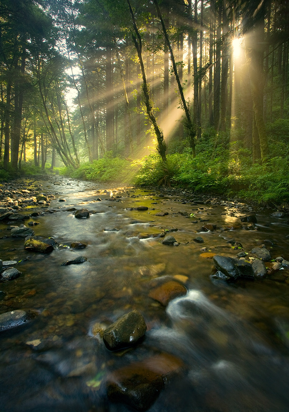 Rock Creek wilderness, wilderness, sun burst, trees, forest, creek, morning, photo