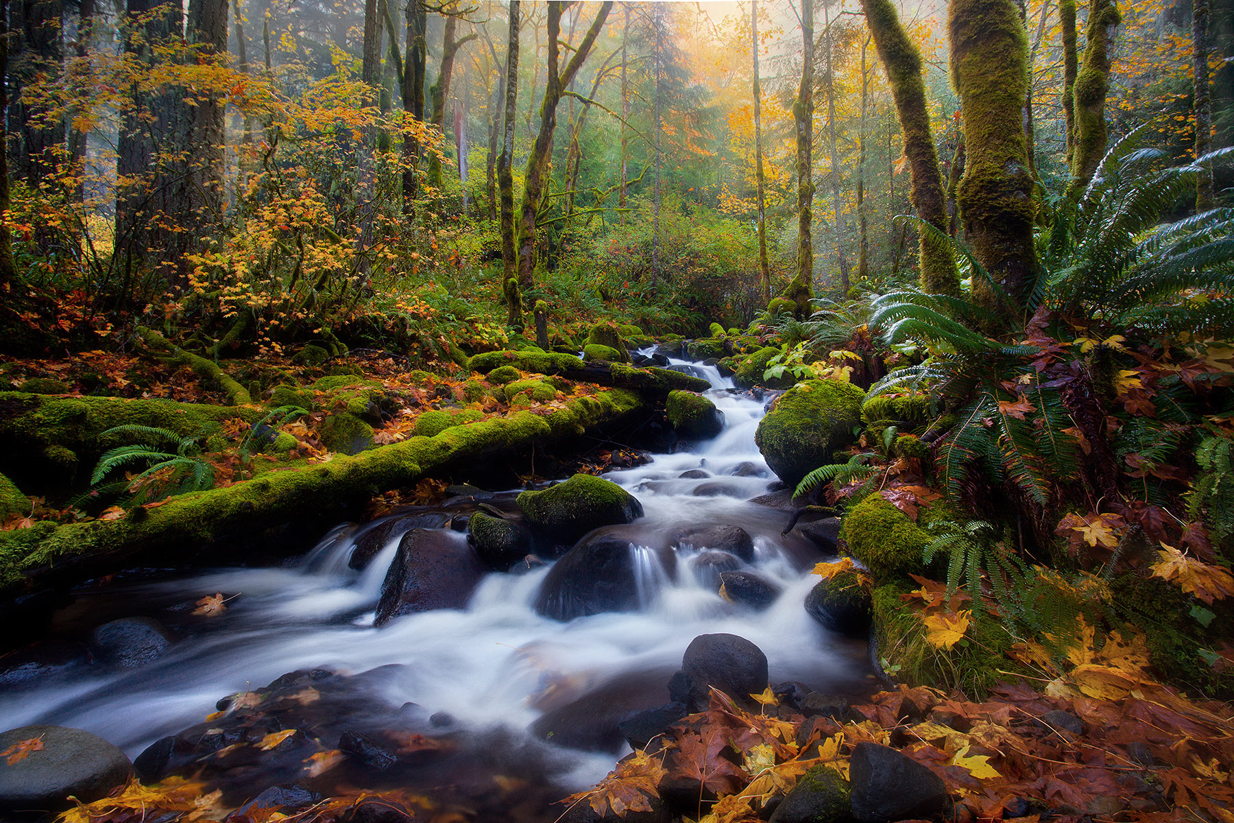 Fog, Cascades, stream, autumn, oregon, gorge, photo