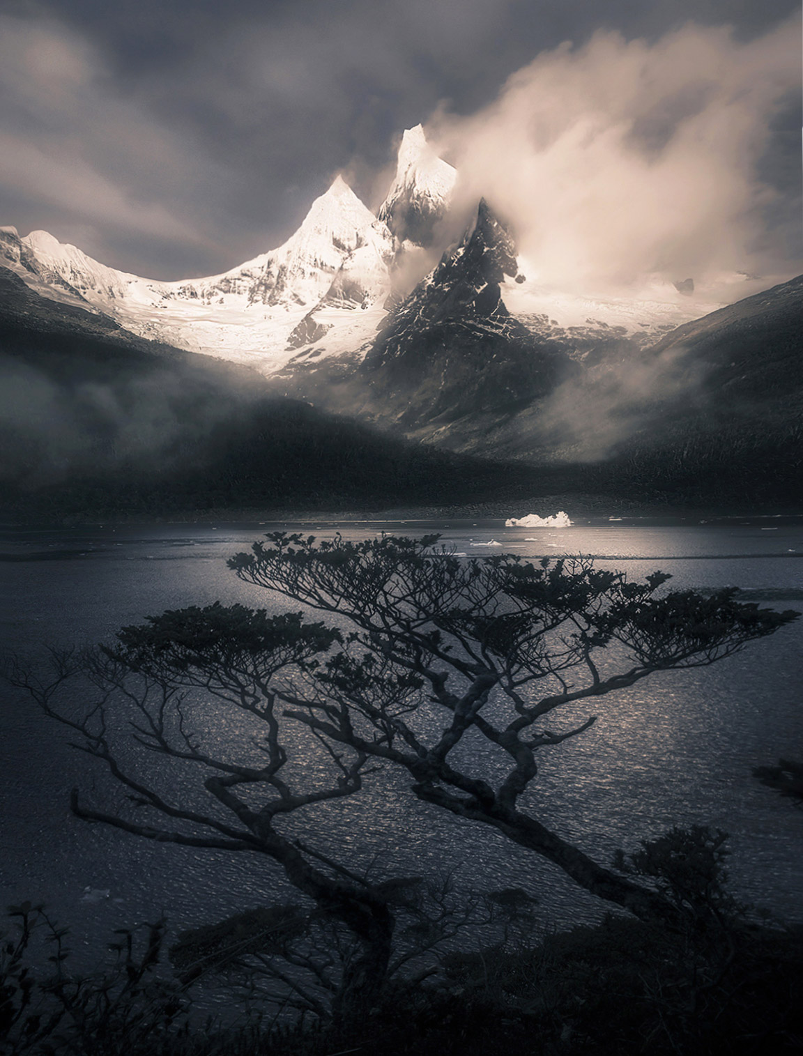 Incredible Coigue trees grow from the temperate rainforest that is the south Chilean Fiords. I scrambled ashore from our zodiac...