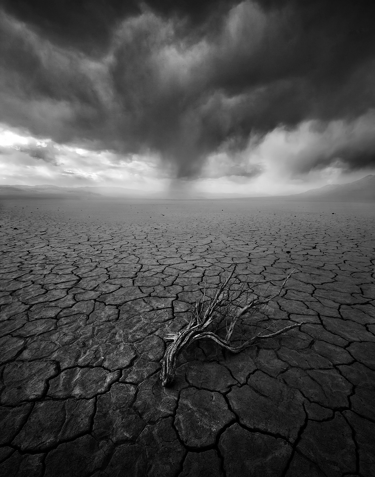playa, cracked, stormy, lone, dead, sagebrush, death valley, photo