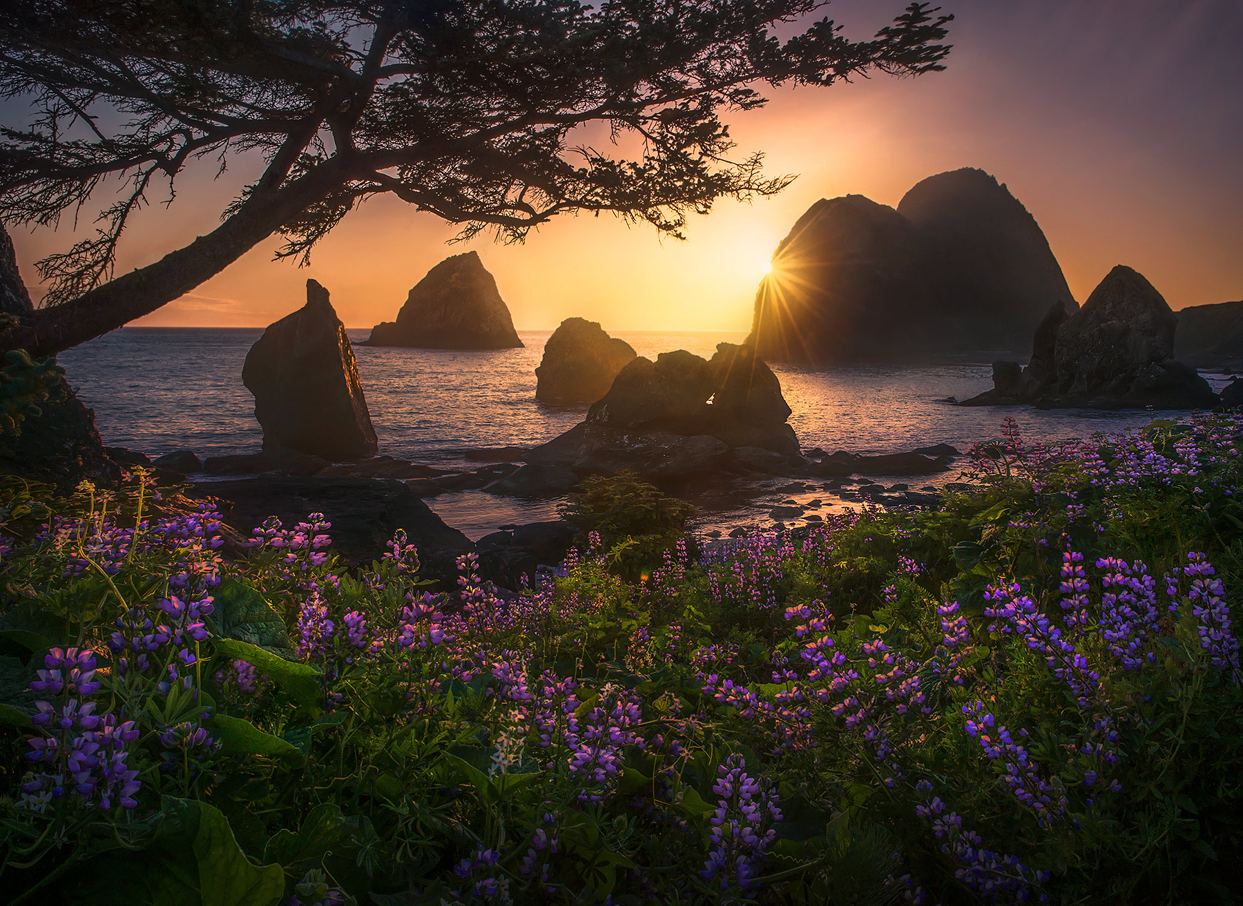 Splendid spring blooms adorn this wild coastline in NorCal.  Numerous sea stack towers are visible behind.