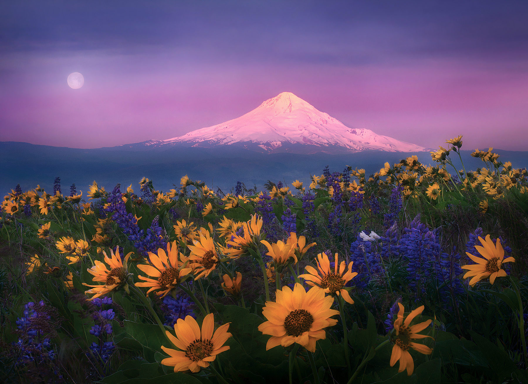 washington, columbia hills, wildflower, mount hood, photo