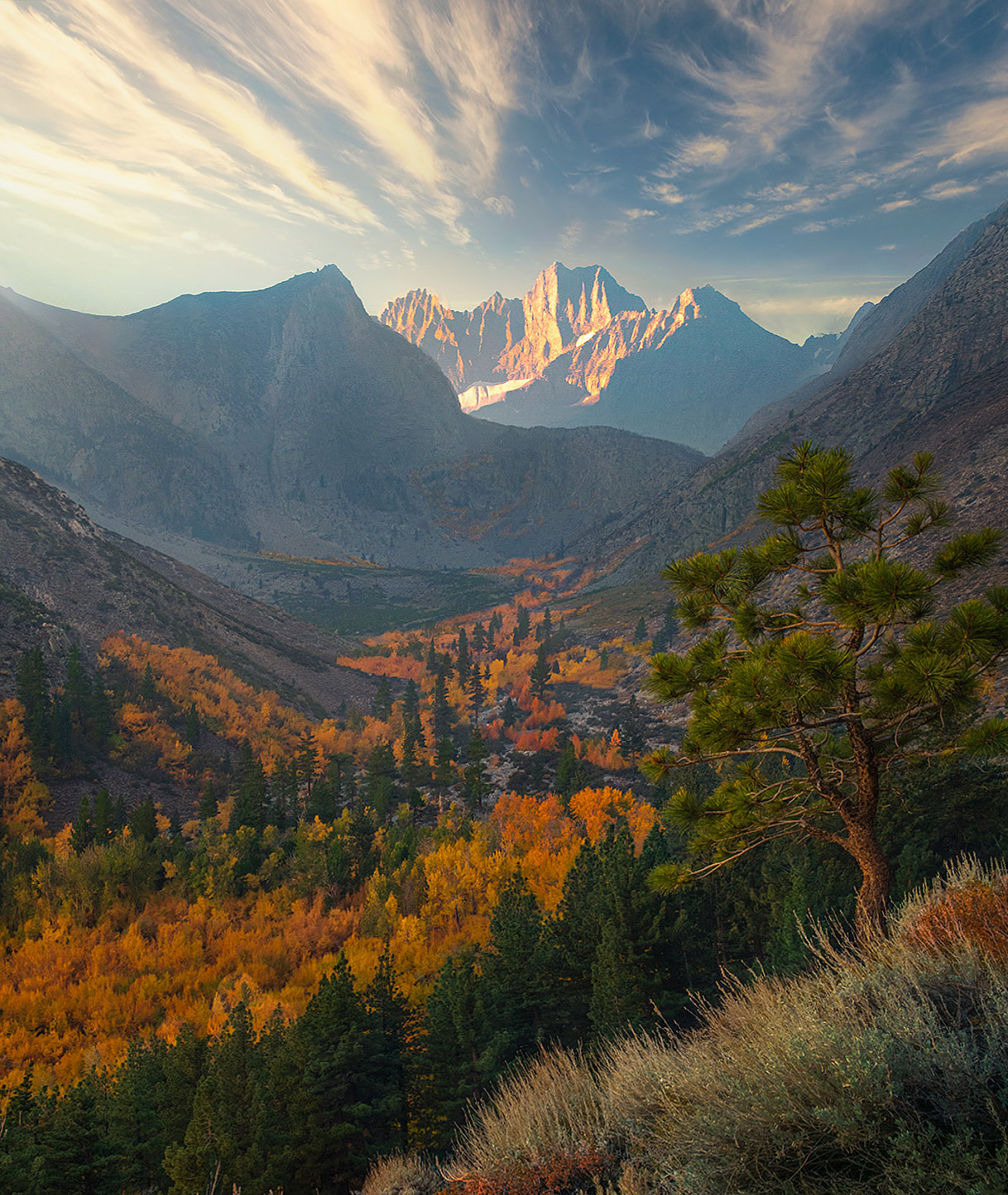 Soft light in the morning with sage, pines and aspen in the eastern Sierra of California.