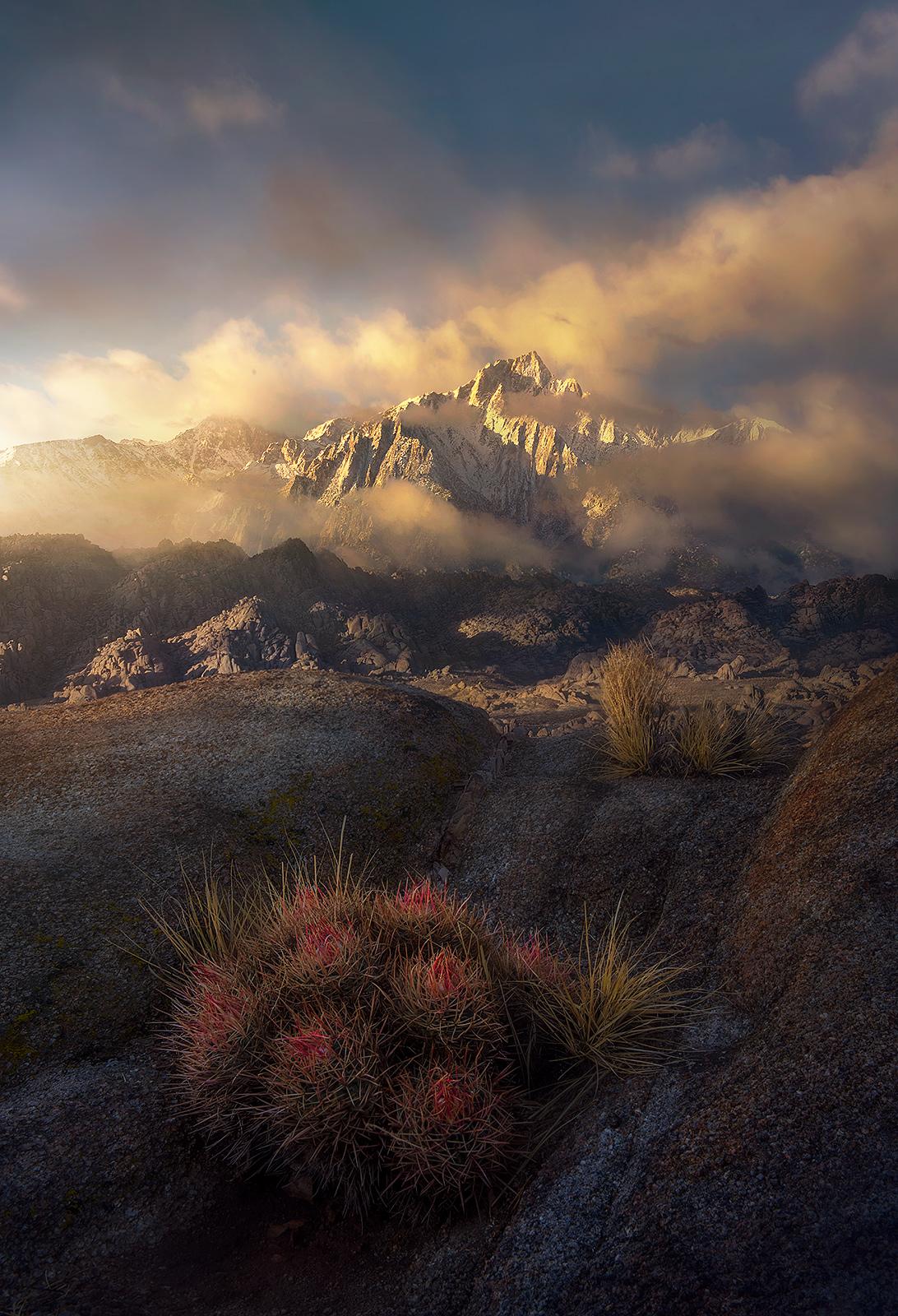 Sierra, Cactus, Snow, Clearing, Storm, Sunrise, Alabama, Mist, Fog, Movie Road, photo
