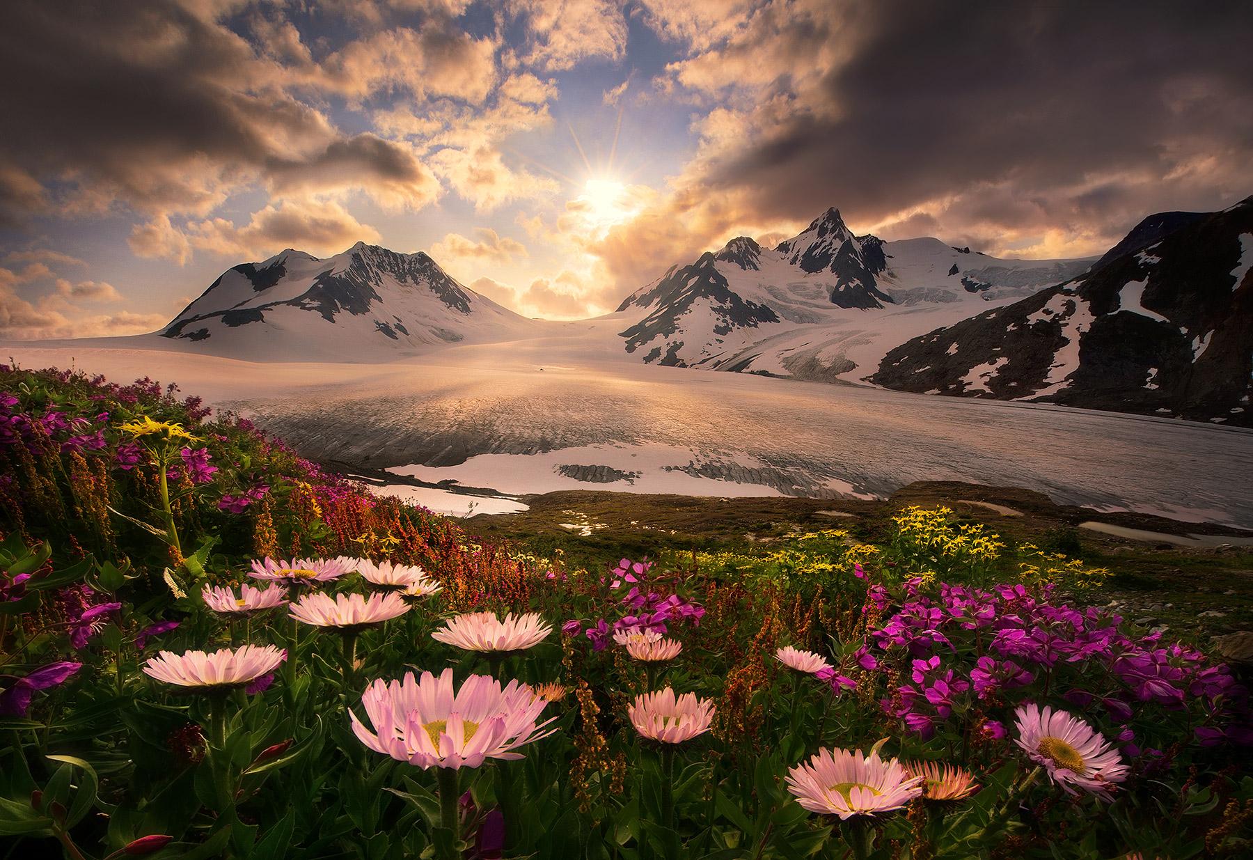 boundary range, Alaska, British Columbia, aster, flowers, summer, marc adamus, photo