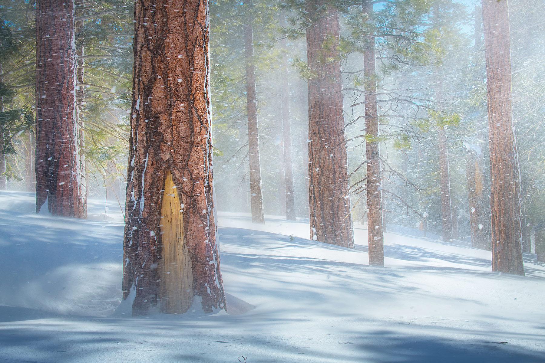 Ponderosa, mammoth, california, winter, snow, red, wind, storm, photo