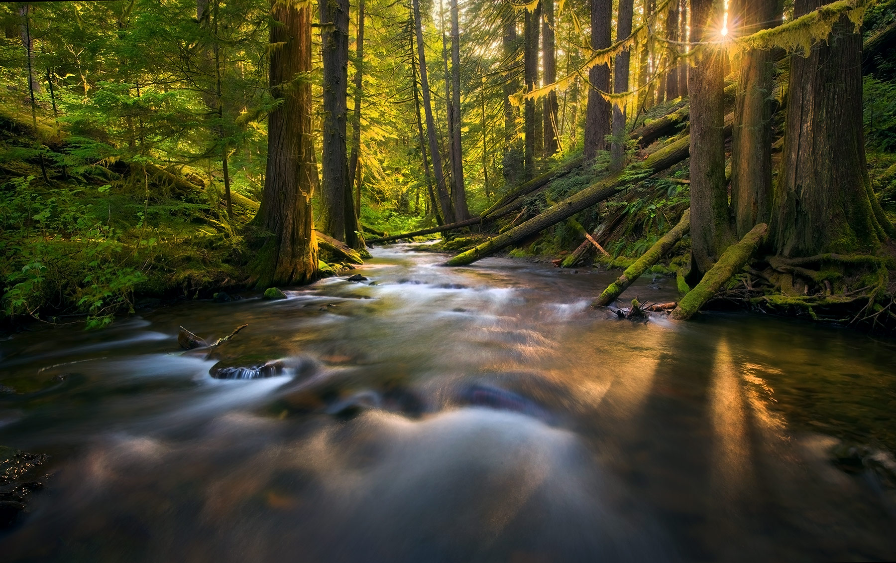 Washington, Gifford-Pinchot, Forest, Rain Forest, Sunbeam, photo
