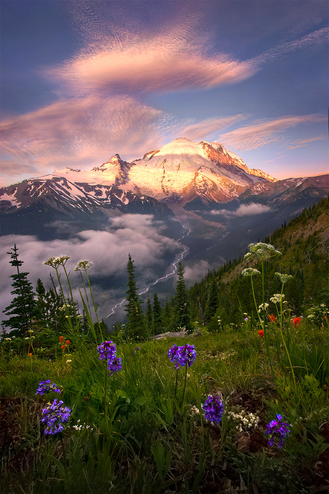 rainier, washington, spring, flowers, white river, photo