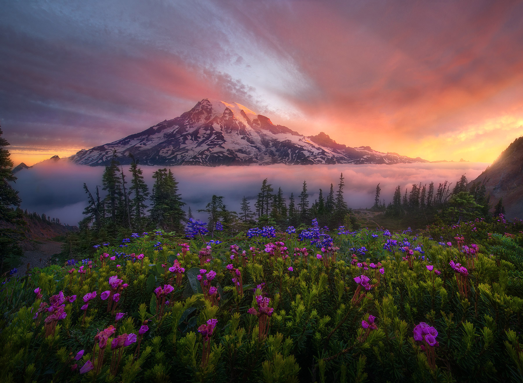 Rainier, sunrise, above, tatoosh, flowers, summer, warm, washington, national park, photo