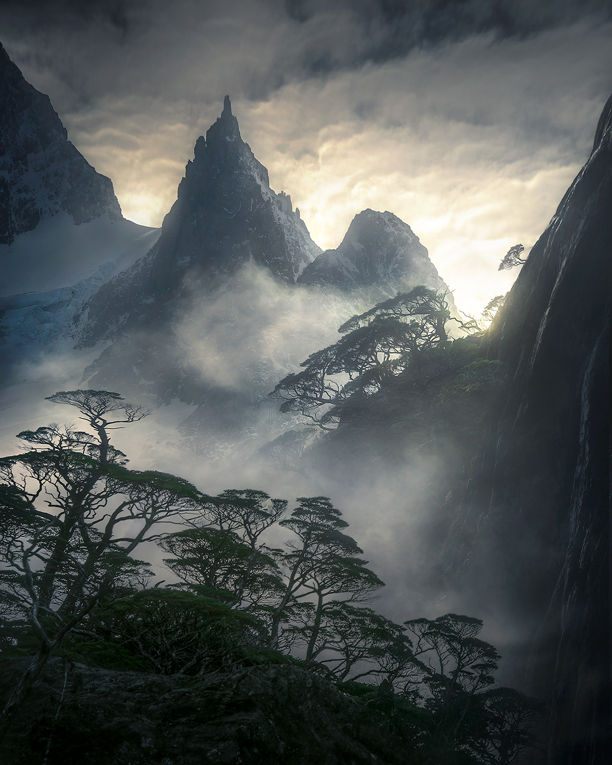 coigue, rainforest, Patagonia, fiords, Chile, peak, misty, photo