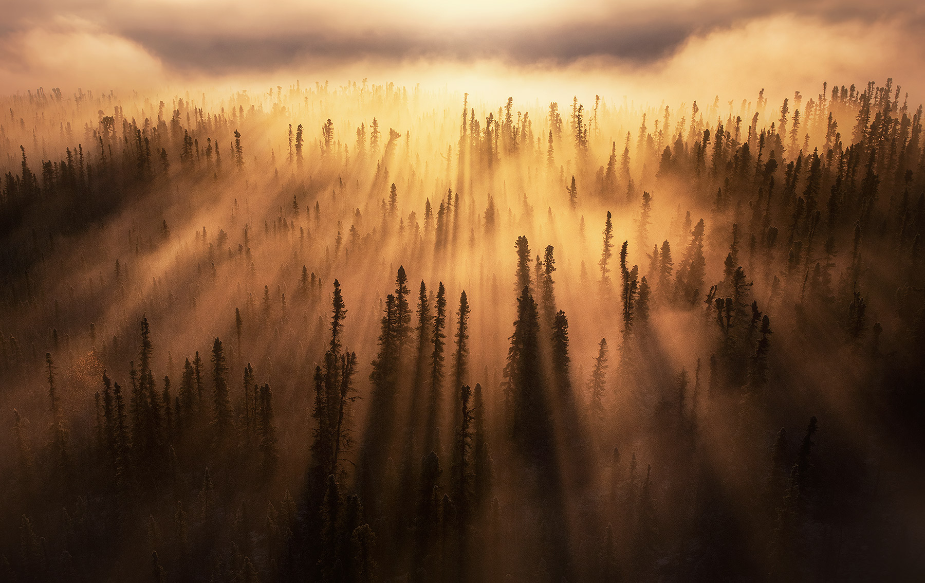 Yukon, forest, beams, light beam, godbeam, photo