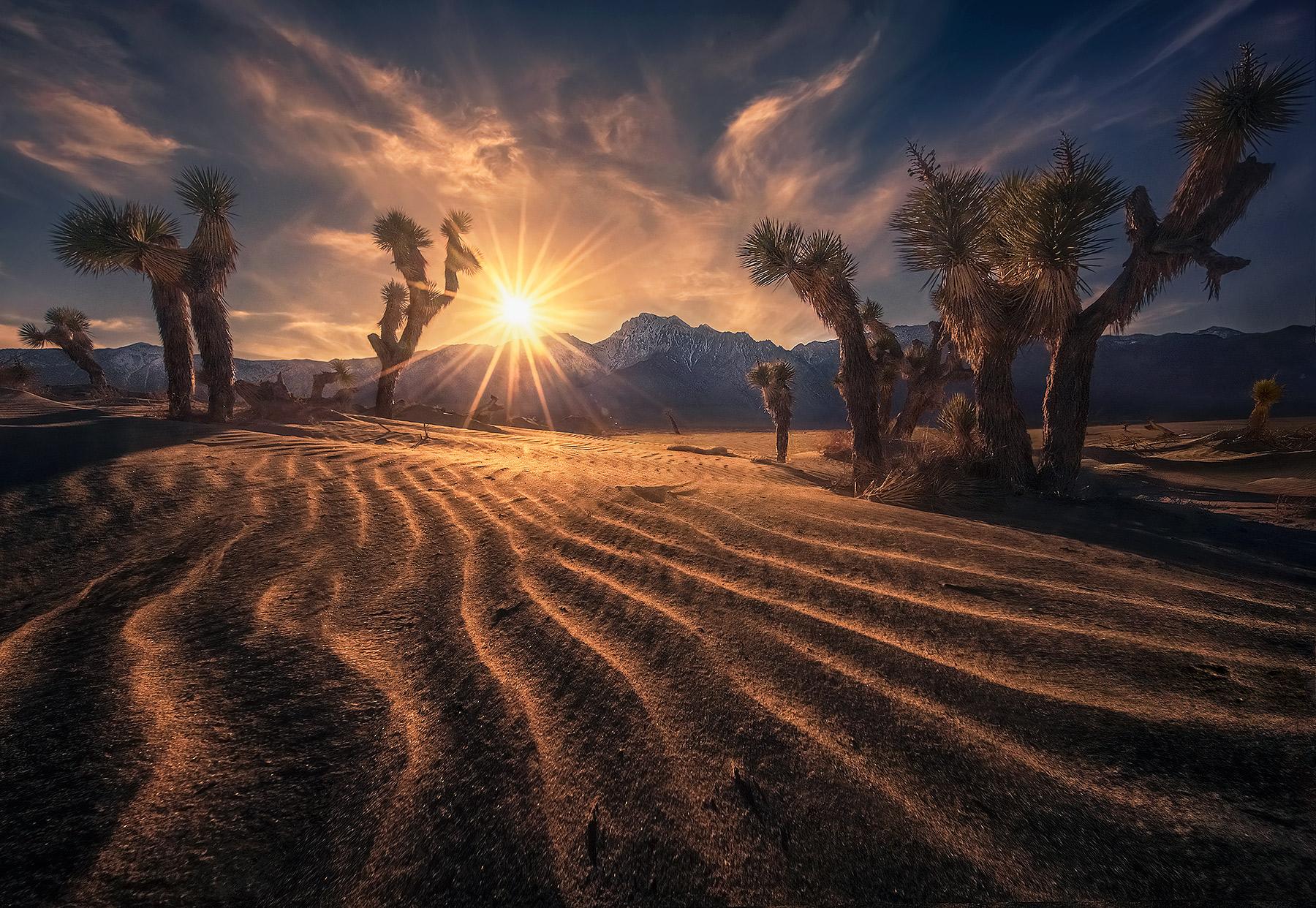 global warming, desertification, desert, sand dunes, dunes, California, Joshua tree, photo