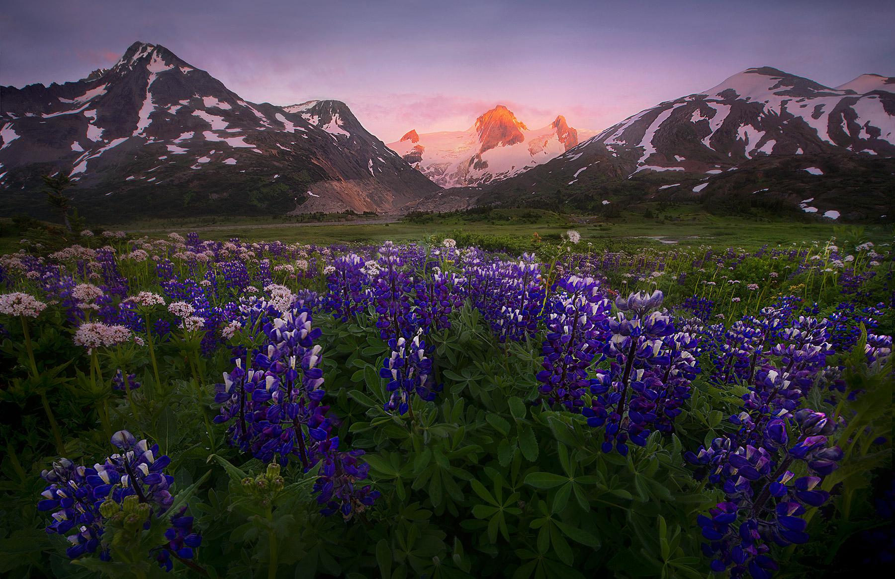 Boundary Range, Glacial, Peak, Alaska, British Columbia, wildflowers, sunset, photo