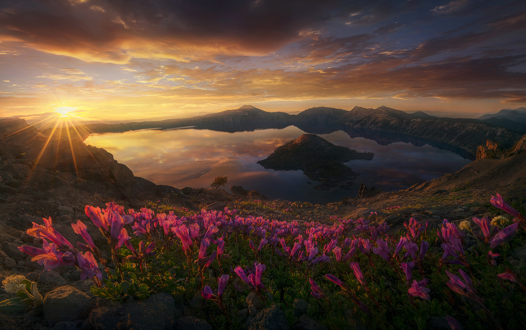 Wizard Island, Crater Lake, Penstemon, Flowers, Wildflowers, Summer, Warm, Sunrise, Oregon, National Park, photo