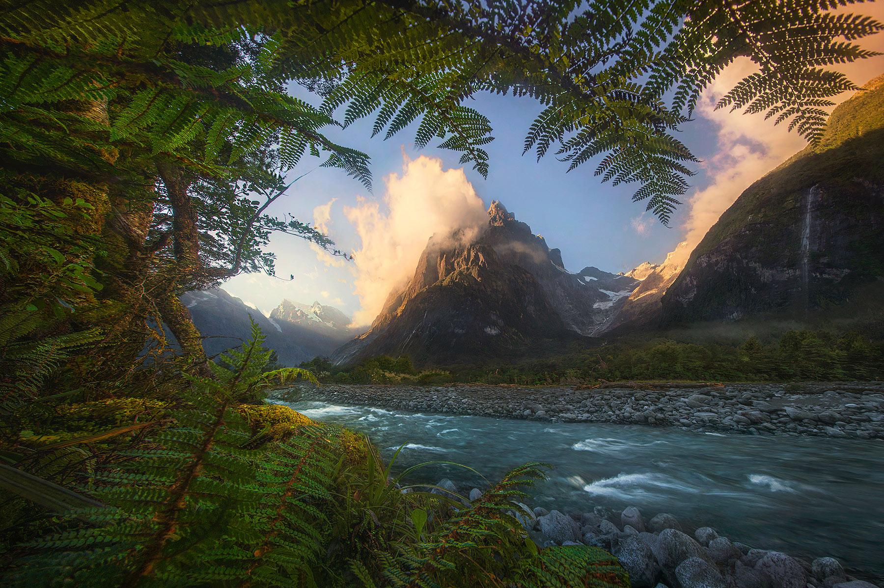 New Zealand, ferns, tutuko, mountain, glacial, photo
