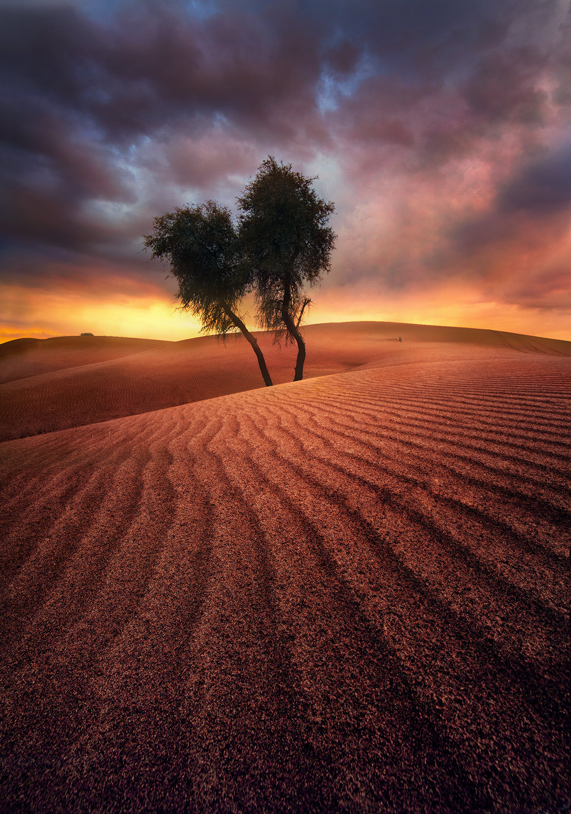 Lone, Trees, Endless, Sand, United Arab Emirates, photo