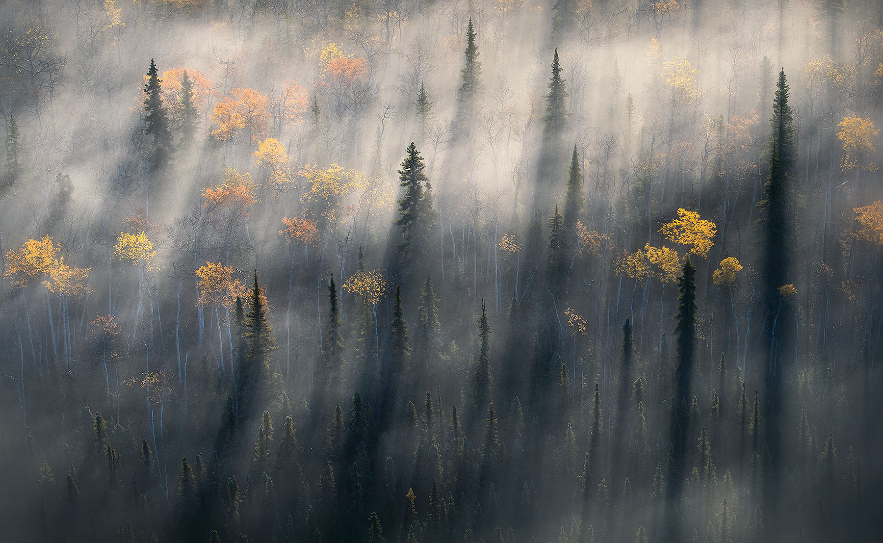 Boreal forest, autumn, fog, peaceful, photo