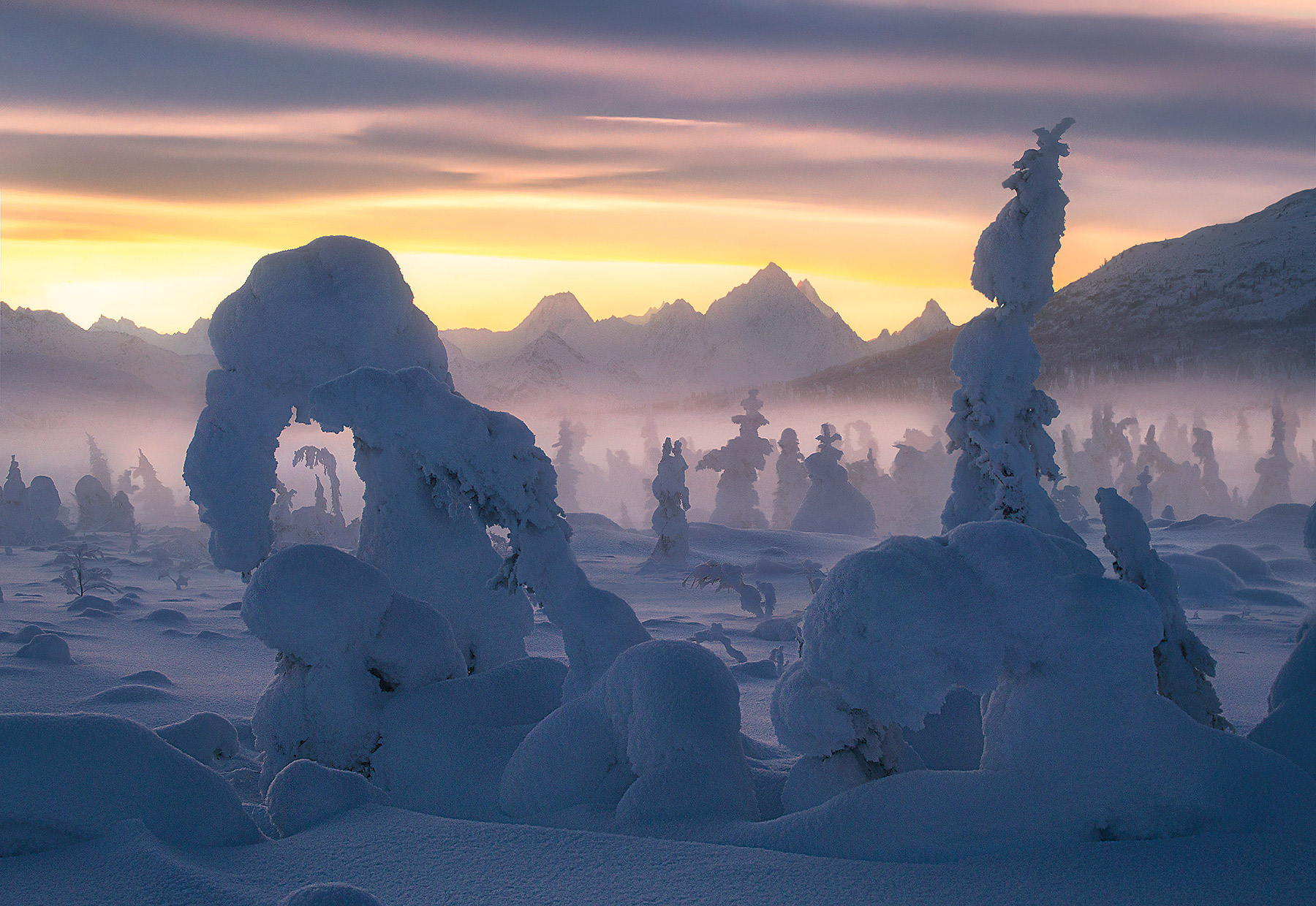 Rime ice covered forest at twilight in Alaska with the Chugach peaks in the background