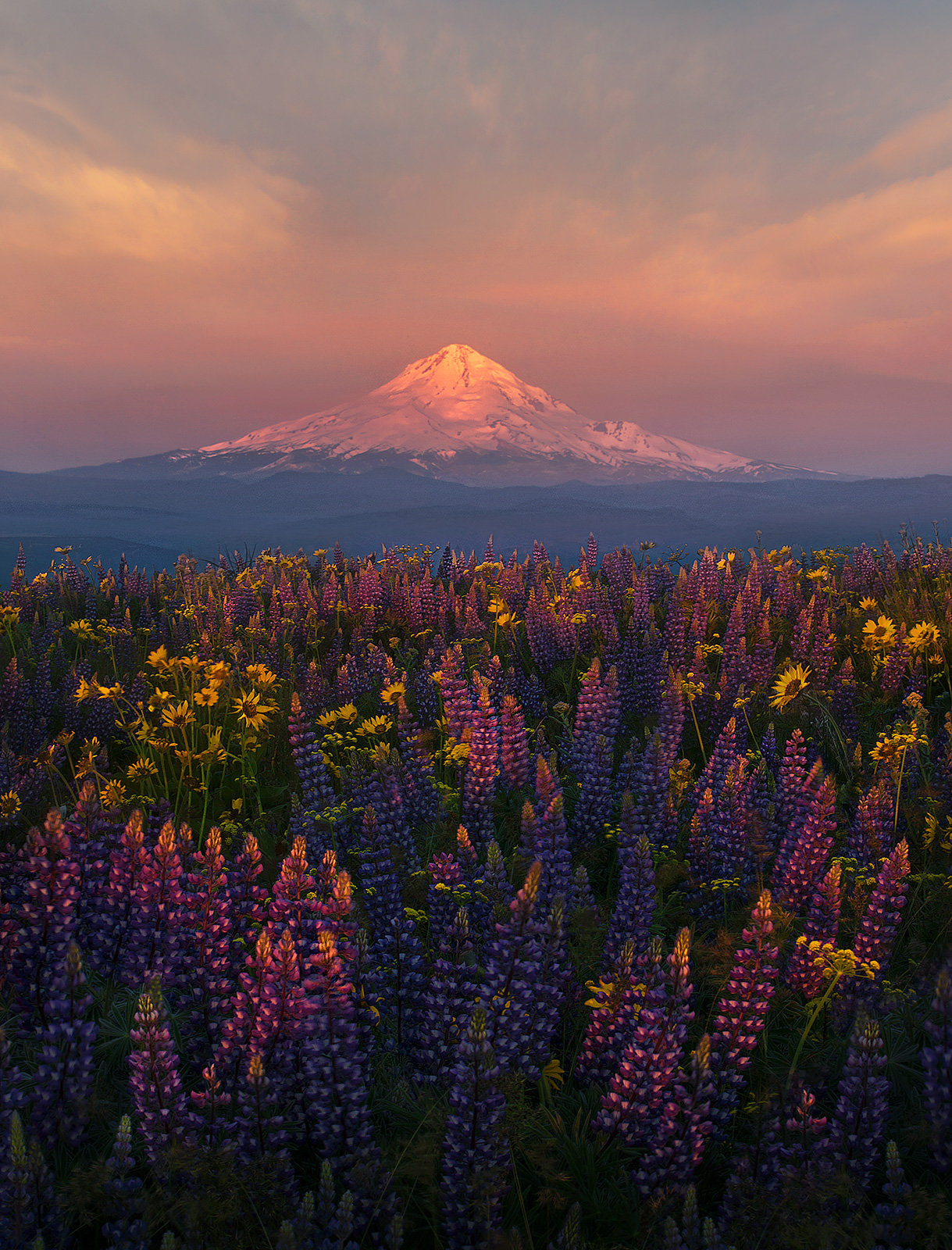 wildflowers, mount hood, photo