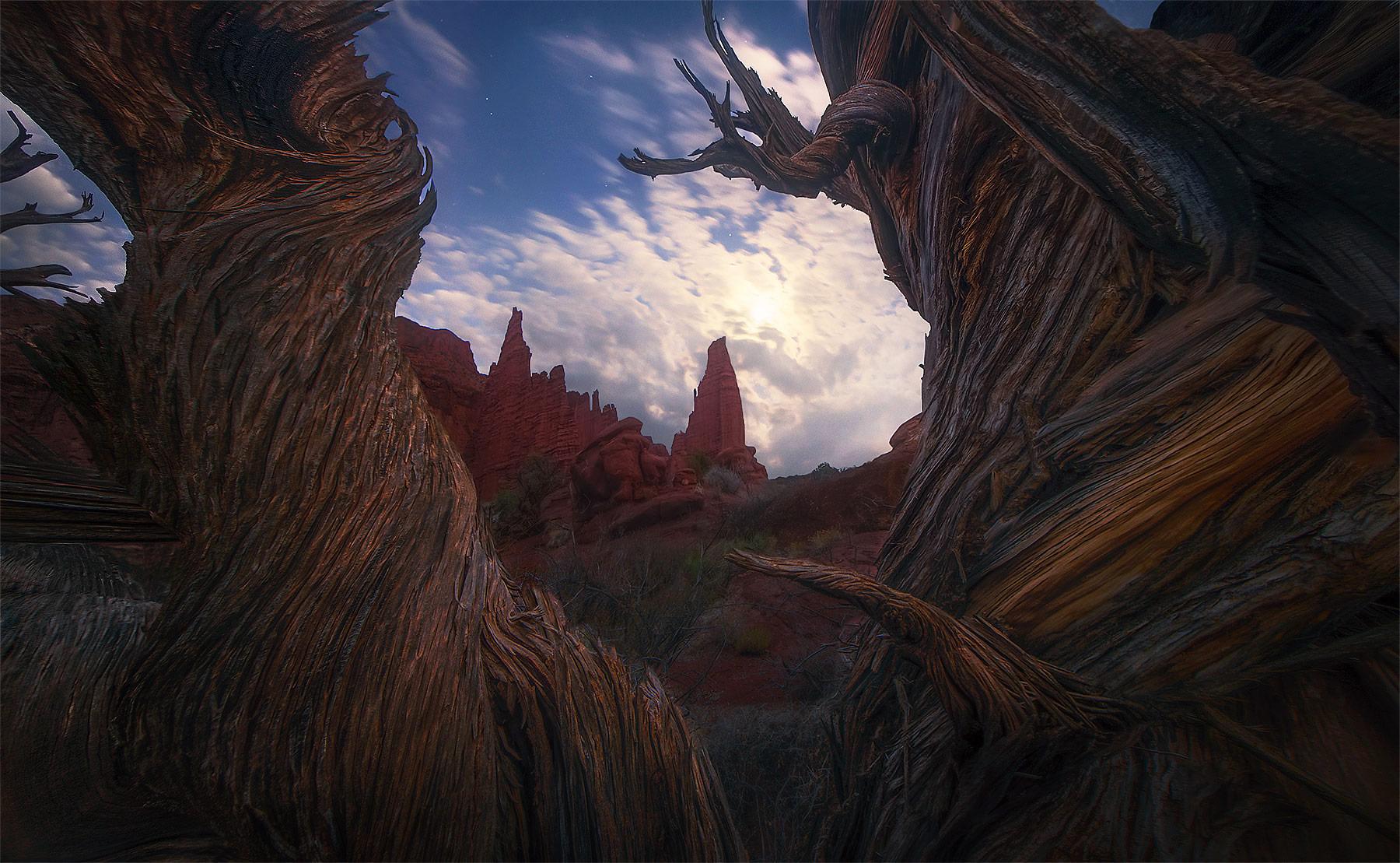 An ancient juniper frames spectacular high cliffs of red rock sandstone in the Utah desert.  A full moon and a few stars adorn...