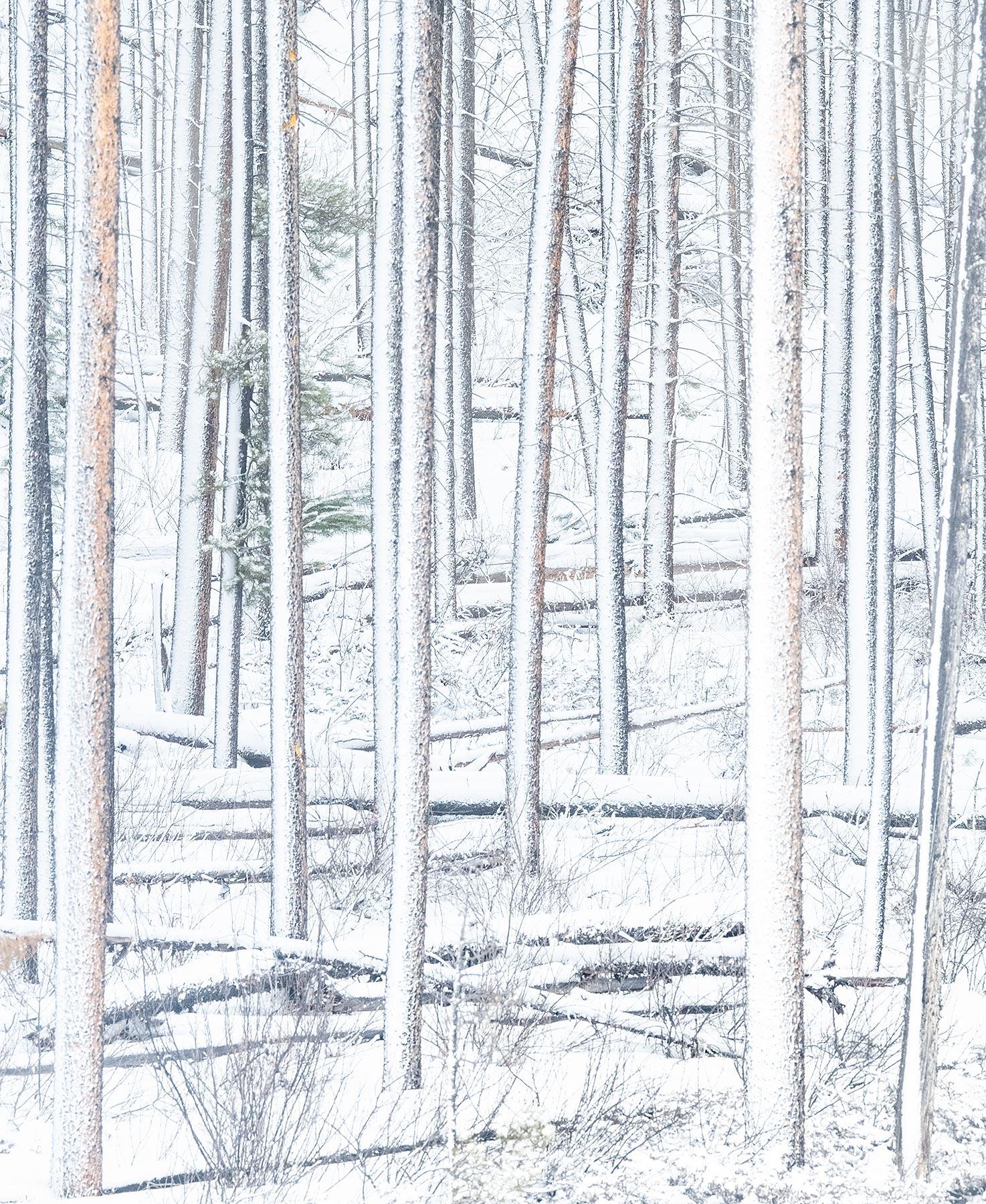 Jasper, white, snow, death, photo