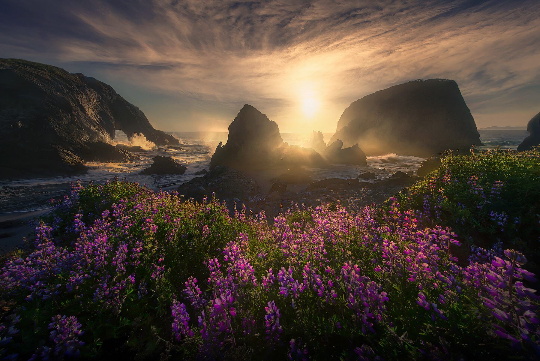 Oregon, wildflowers, beach, coast, waves, sunset, flowers, south coast, bandon, spring, photo