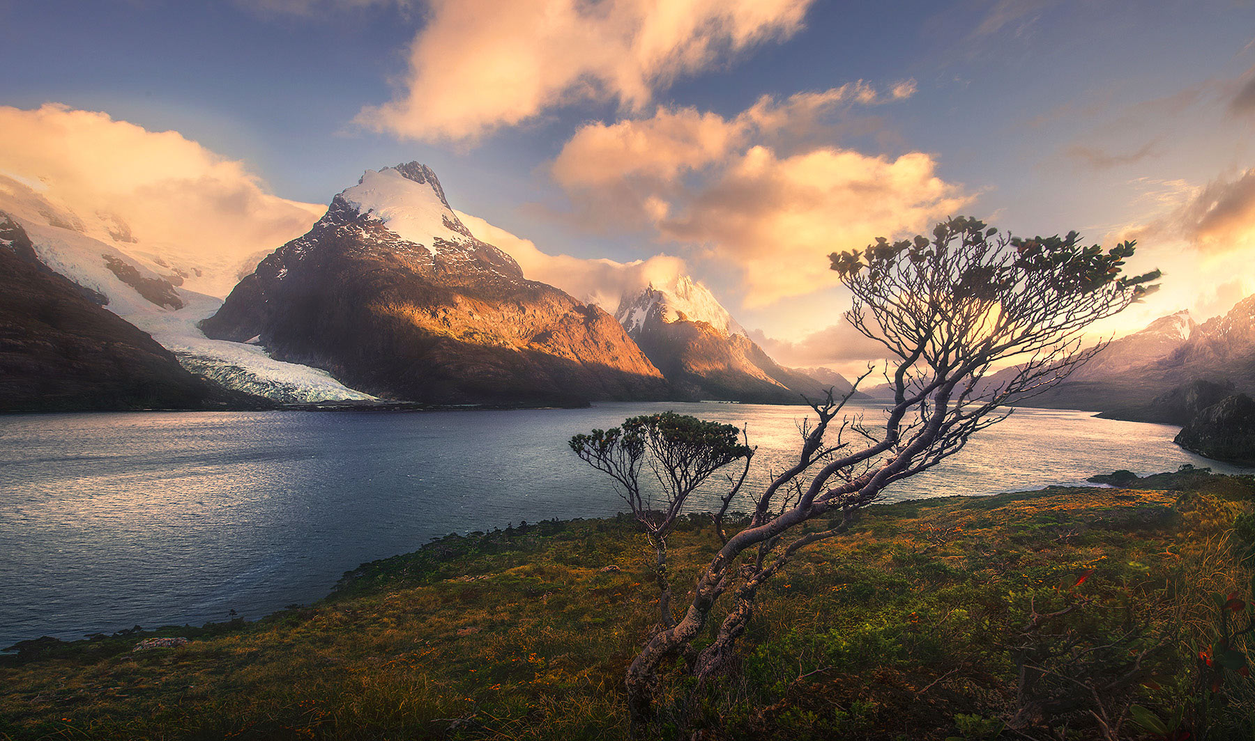 Patagonian fiords, coigue, tree, peaks, Chile, photo
