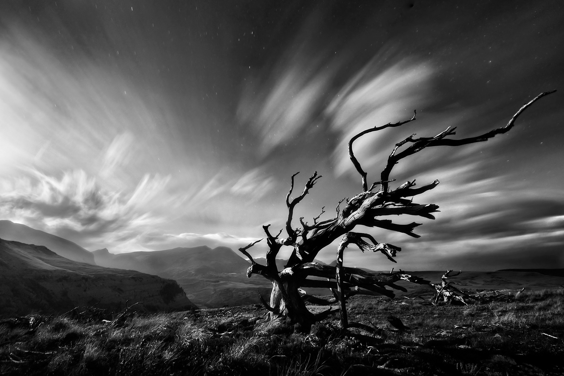 A black and white rendition of an ancient tree under moonlight using a long exposure to streak the skies across Blackfoot Land...