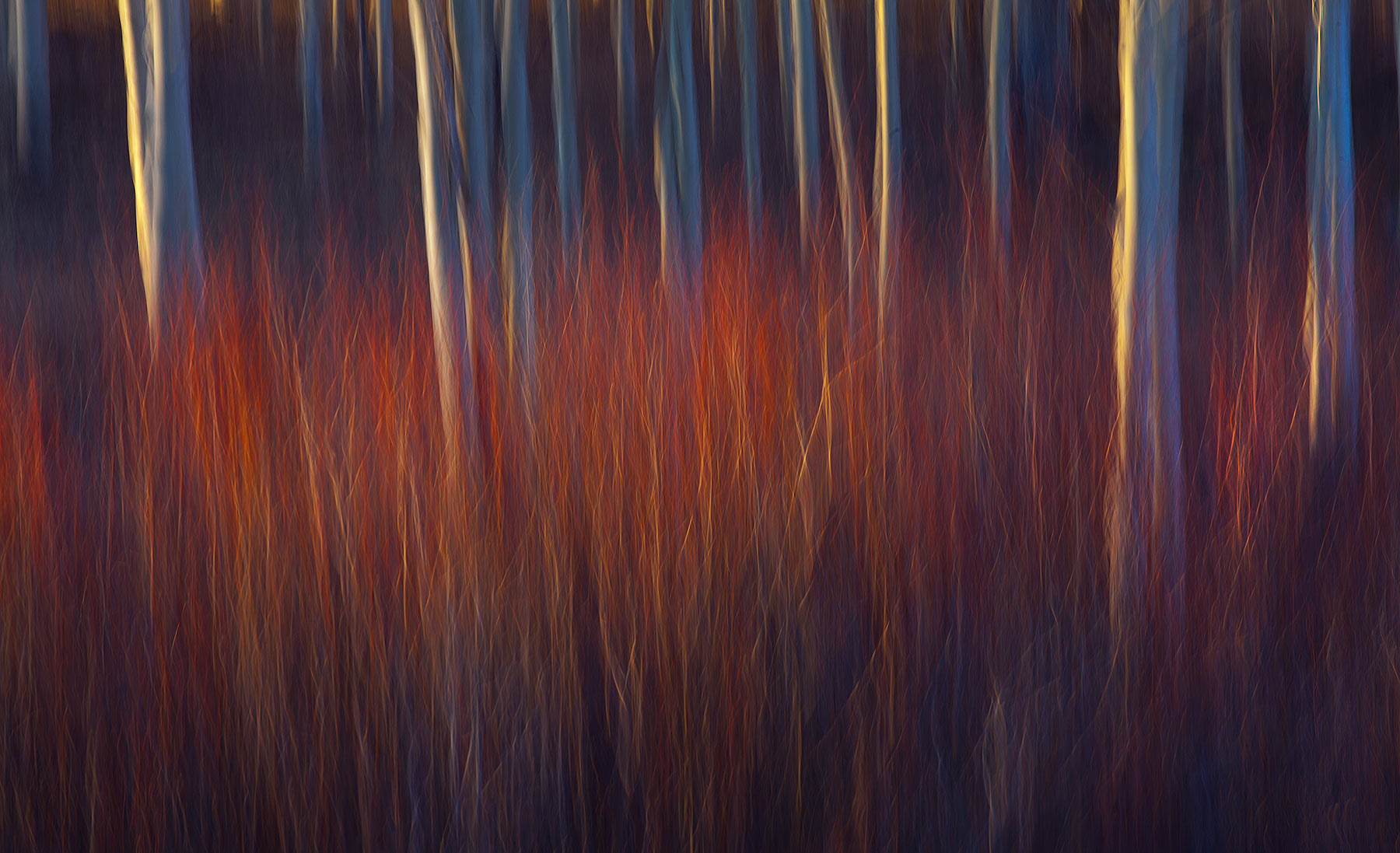 Willow, Aspen, Abstract, motion, photo