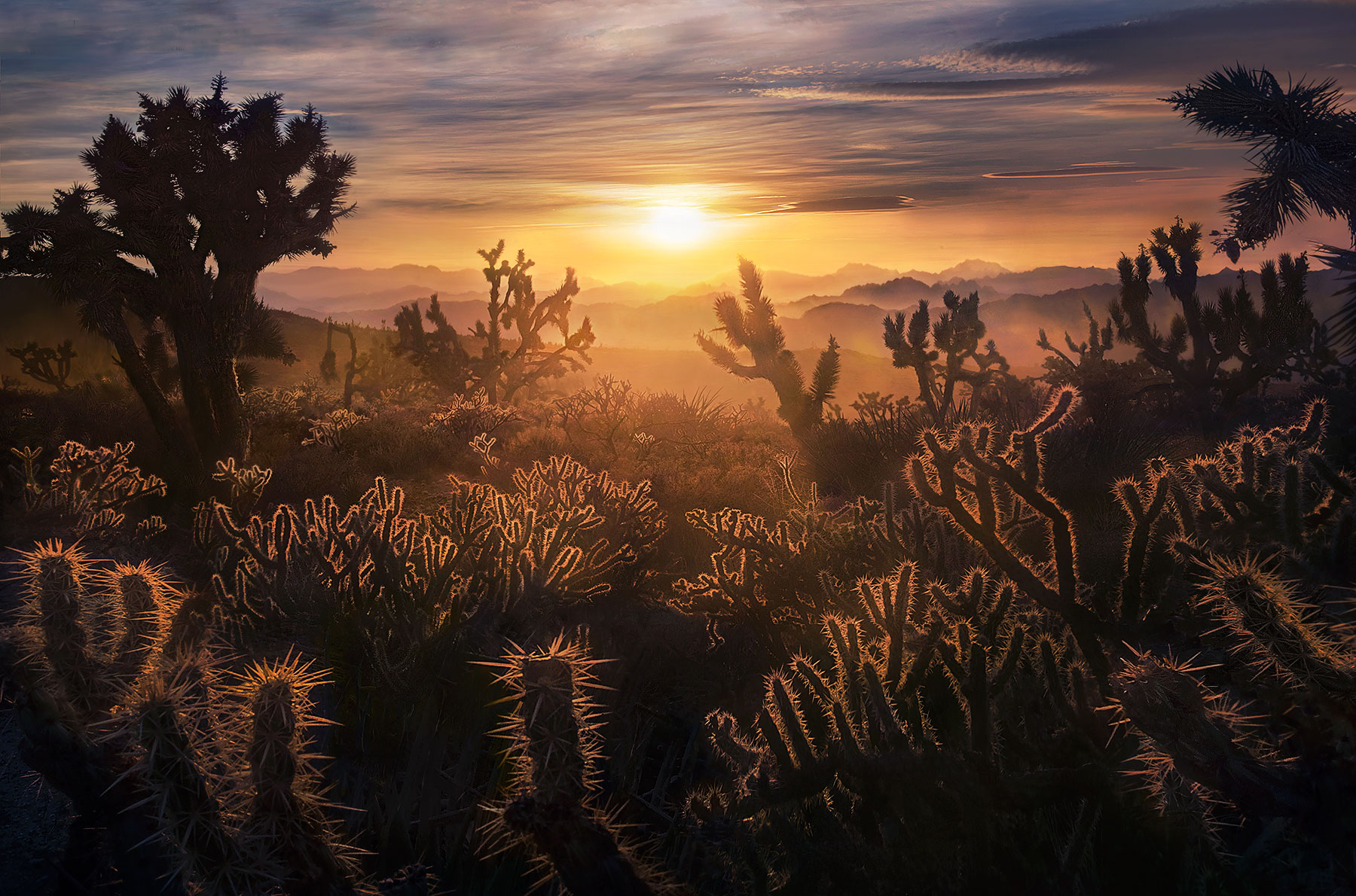 Mojave, Cactus, Joshua Tree, Sunset, Desert, California , photo